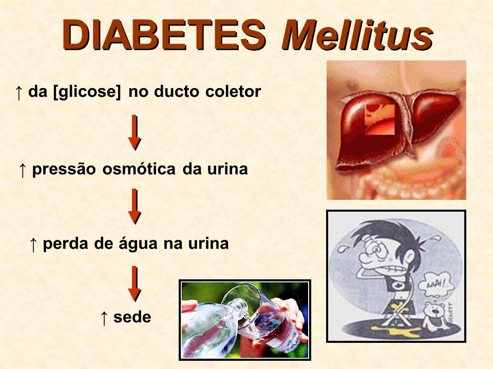 DIABETES Mellitus ↑ da [glicose] no ducto coletor